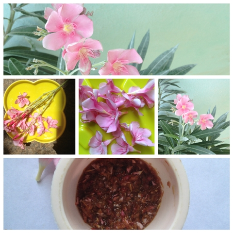 OLEANDER FLOWER FACE PACK